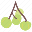 fruit, green cherry, healthy food, nutritionist diet, sweet food icon