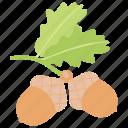 acorn, diet food, dried fruit, fruit, healthy food icon