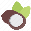 coconut, dried fruit, healthy food, healthy fruit, nutrition food icon