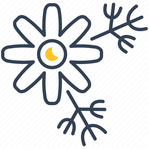 chamomile, plant, seeds icon
