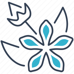 hypericum, plant, seeds icon