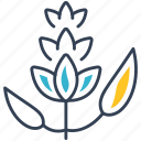 liquorice, plant, seeds icon