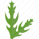 aloe, food, greenery, vegetables icon