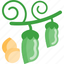 beans, food, greenery, peas icon