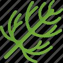dill, food, greenery, stalk icon