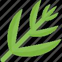 food, green, greenery, sheet, stalk, vegetables
