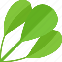 food, greenery, plant, vegetables