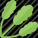 food, greenery, stalk, vegetables
