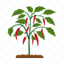 agriculture, bitter, chili, garden, pepper, plant, spicy icon