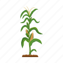 agriculture, cob, corn, garden, maize, plant icon