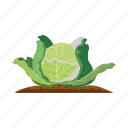 agriculture, cabbage, garden, head, plant icon