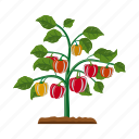 agriculture, fruit, garden, plant, red, sweet pepper icon