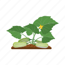 garden, zucchini, agriculture, squash, vegetable marrow, plant icon