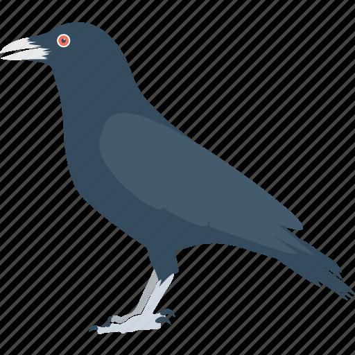 bird, blackbird, crow, fly, scare icon