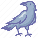 crow, halloween, witch icon