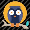 wildlife, halloween, moon, animal, bird, night, owl