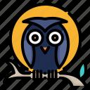 animal, bird, halloween, moon, night, owl, wildlife