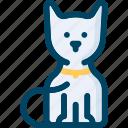 animal, cat, feline, halloween, kitten