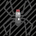 animals, arachnid, bug, halloween, insect, spider