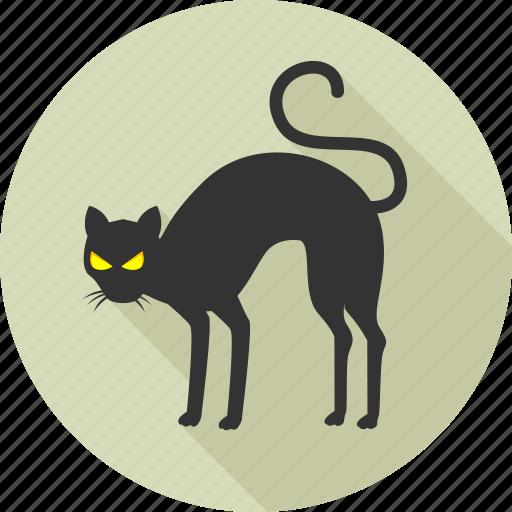 animal, animals, black cat, cat, halloween, nature, wild icon