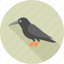 animal, animals, bird, crow, halloween, nature, sparrow icon