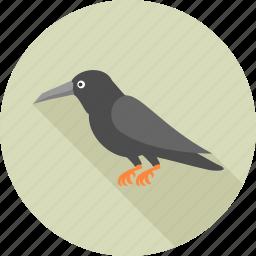 animal, animals, bird, crow, halloween, nature, sparrow icon