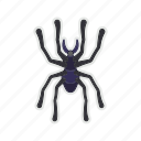 bug, halloween, poison, spider icon