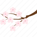 branch, cherry blossom, flower, hanami, sakura, spring, tree