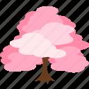 cherry blossom, flower, hanami, ooyama sakura, sakura, spring, tree