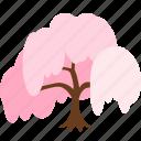 cherry blossom, flower, hanami, sakura, shidare sakura, spring, tree icon