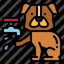 animal, cleaning, dog, hand, washing