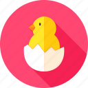 bird, chick, chicken, egg, eggshell, farm, hen icon