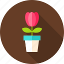 flower, flower pot, nature, pot, seasonal, spring, tulip icon