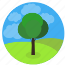 development, growing, health, nature, project, startup, tree, implement