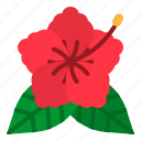 blossom, botanical, flower, hibiscus, petals