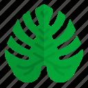 hawaii, leaf, monstera, nature, tropical