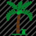 botanical, palm, summertime, tree, tropical