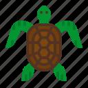 animal, aquarium, life, turtle, zoo