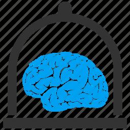 bulb, human, knowledge, mind, organ, science, user brain icon
