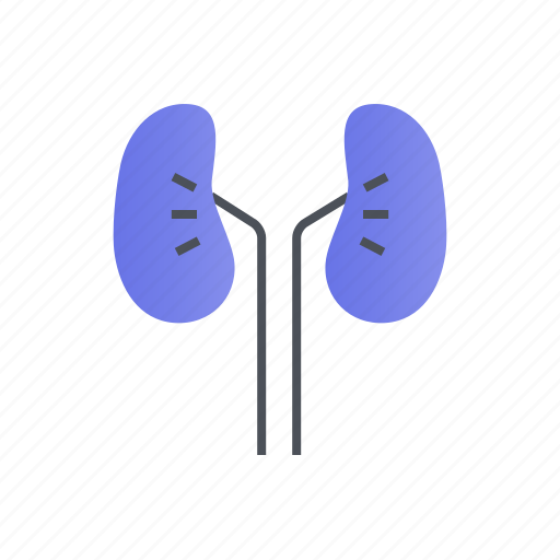 kidney, kidneys, medical, organ, treatment icon