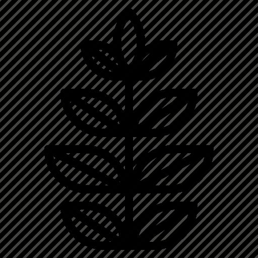 healthy, herb, leaf icon