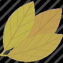 bay, food, herbs, leaf icon