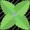 flower, herbs, seed, sheet