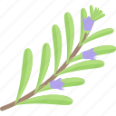 flower, herbs, plant, seed