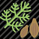 herbs, plant, seed, sheet
