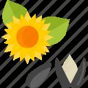 food, herbs, seed, sunflower icon
