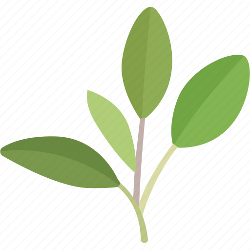 common, cooking, fresh, garden, herb, leaves, sage icon