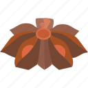 anethole, anise, culinary, liqeur, spice, star, star anise icon