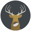 animal, animals, deer, elk, horns, moose, wild animal icon