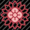 rangoli, pattern, cultures, adornment, decoration